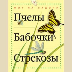 Мир на ладони  Пчелы  Бабочки  Стрекозы